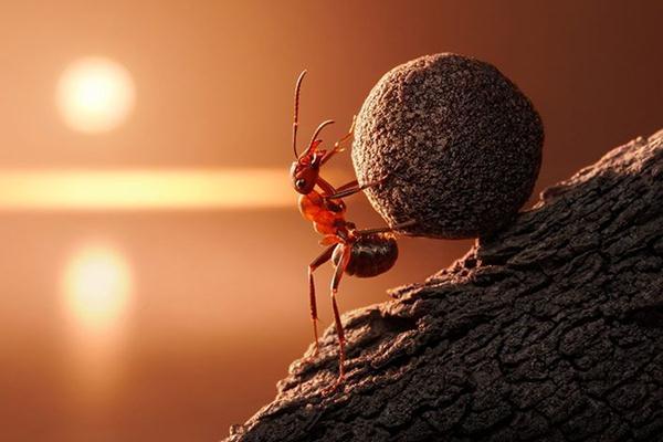 Kako je vrijedan mrav dobio otkaz?